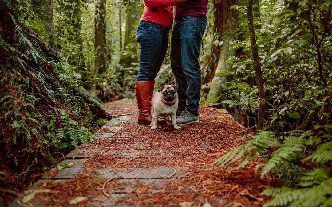 Lisa and Anton's Waikato Family Portraits