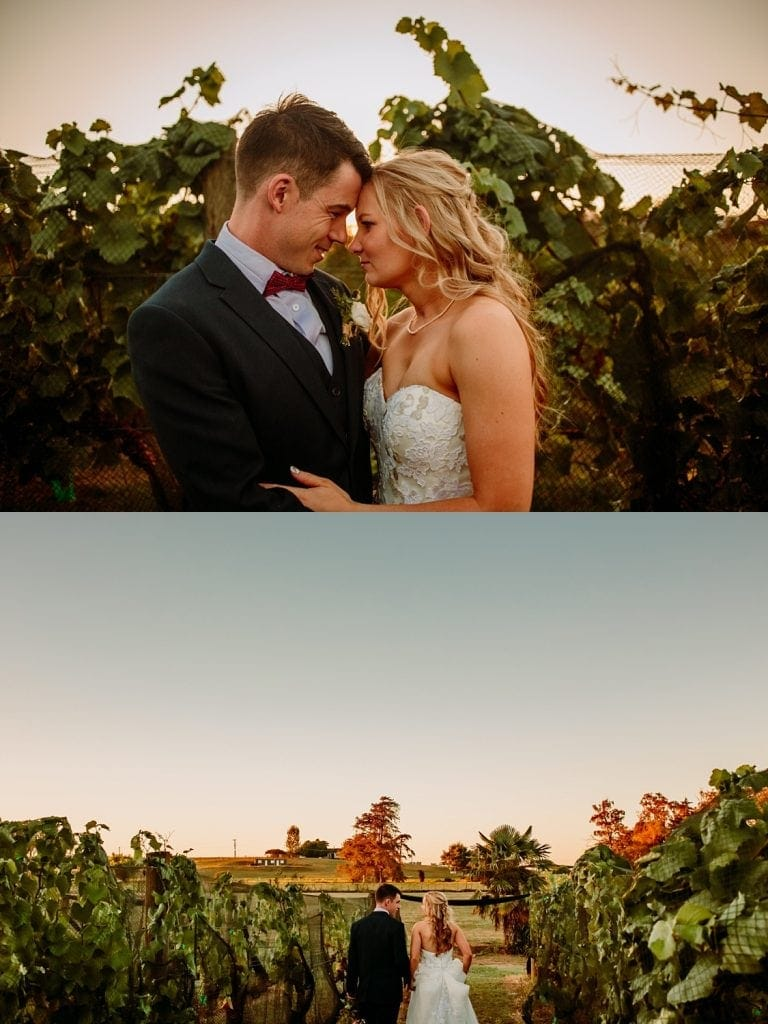 Bride and groom walking through the vines at Vilagrad Winery